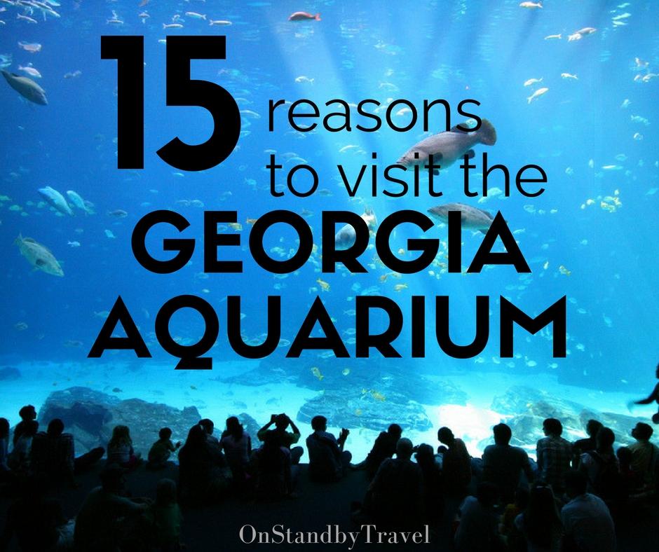 15 reasons to visit the Georgia Aquarium