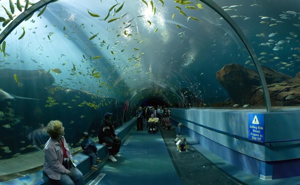 georgia_aquarium_-_ocean_voyager_tunnel_jan_2006