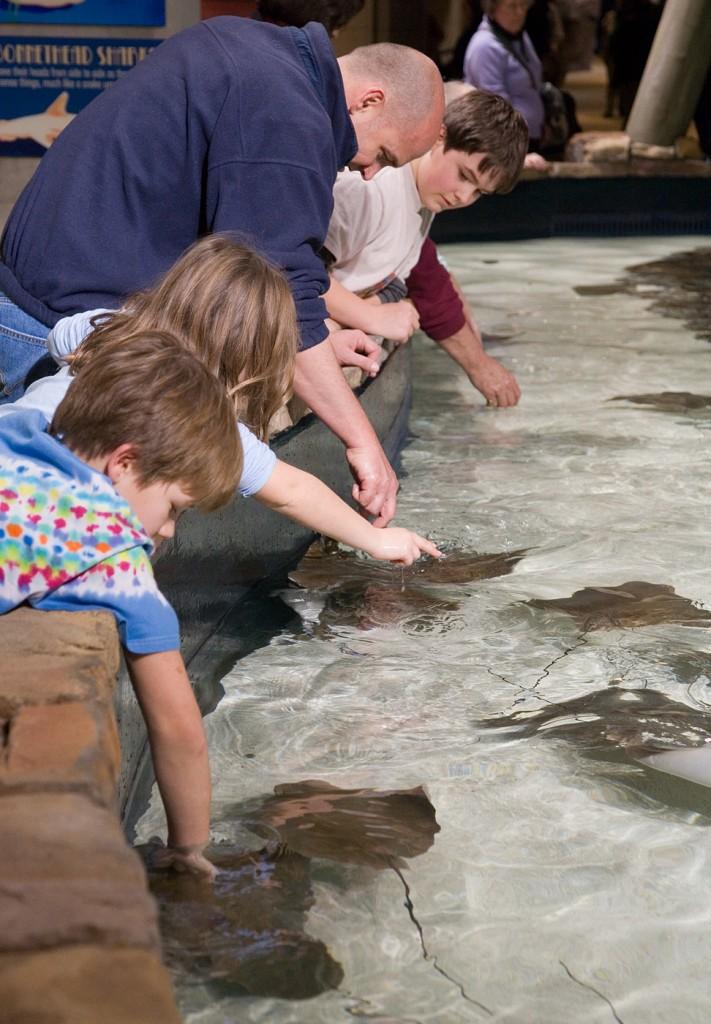 georgia_aquarium_petting_tank_-_january_2006