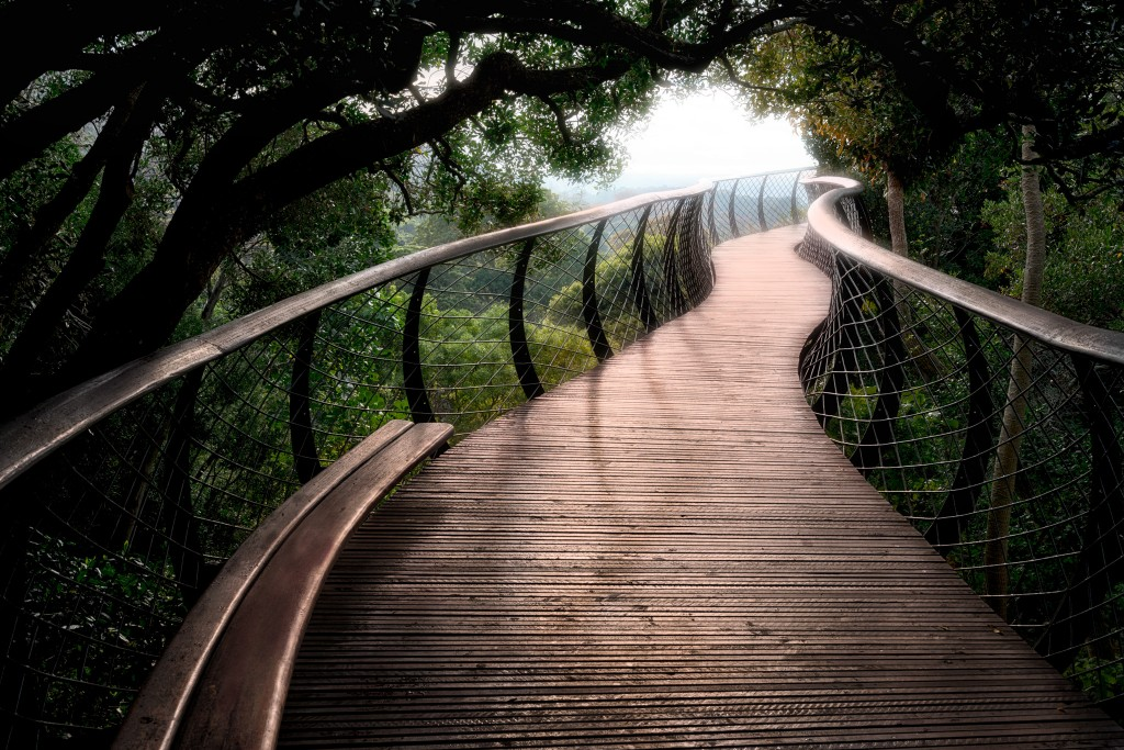 Canopy Walk Kirstenbosch Gardens